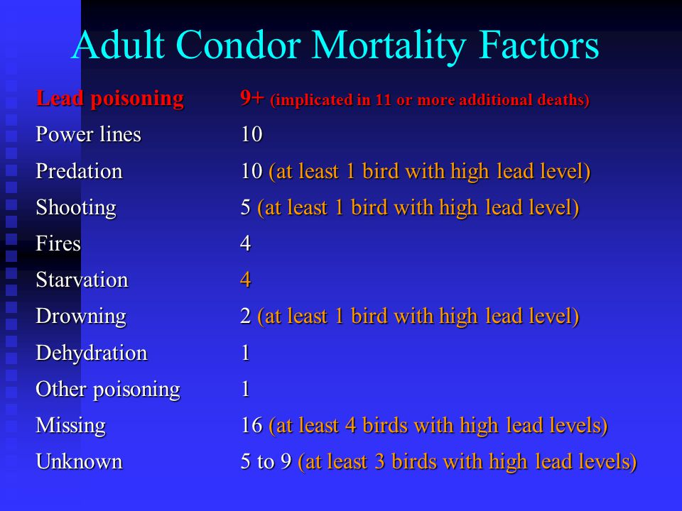 Adult Condor Mortality Factors Lead poisoning9+ (implicated in 11 or more additional deaths) Power lines10 Predation10 (at least 1 bird with high lead level) Shooting5 (at least 1 bird with high lead level) Fires4 Starvation4 Drowning2 (at least 1 bird with high lead level) Dehydration1 Other poisoning1 Missing16 (at least 4 birds with high lead levels) Unknown5 to 9 (at least 3 birds with high lead levels)