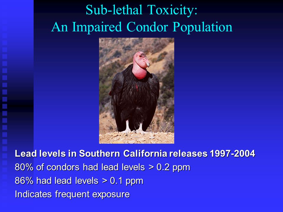 Efforts to Address Lead Exposure Food subsidy Chelation Therapy Hunter Education