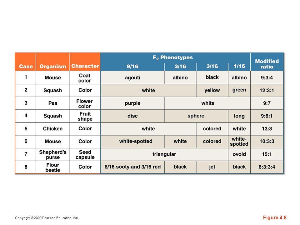 Copyright © 2009 Pearson Education, Inc. Figure 4.8