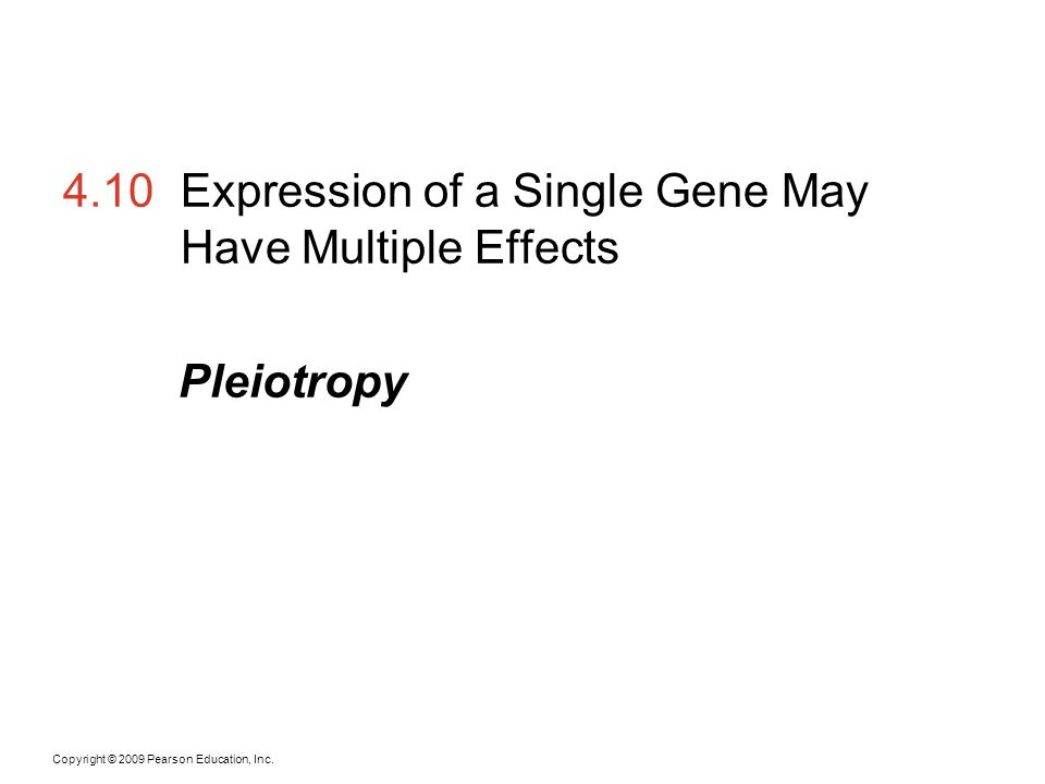 Copyright © 2009 Pearson Education, Inc. 4.10Expression of a Single Gene May Have Multiple Effects Pleiotropy