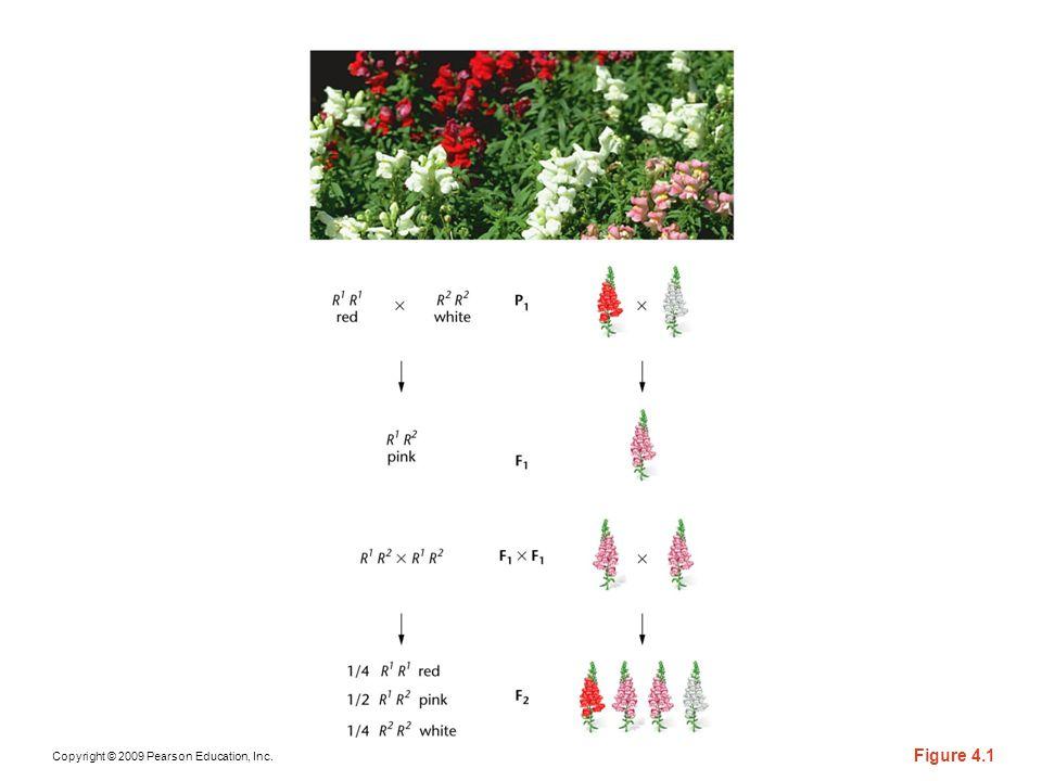 Copyright © 2009 Pearson Education, Inc. Figure 4.1