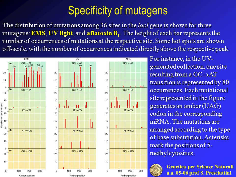 Genetica per Scienze Naturali a.a. 05-06 prof S. Presciuttini Specificity of mutagens The distribution of mutations among 36 sites in the lacI gene is