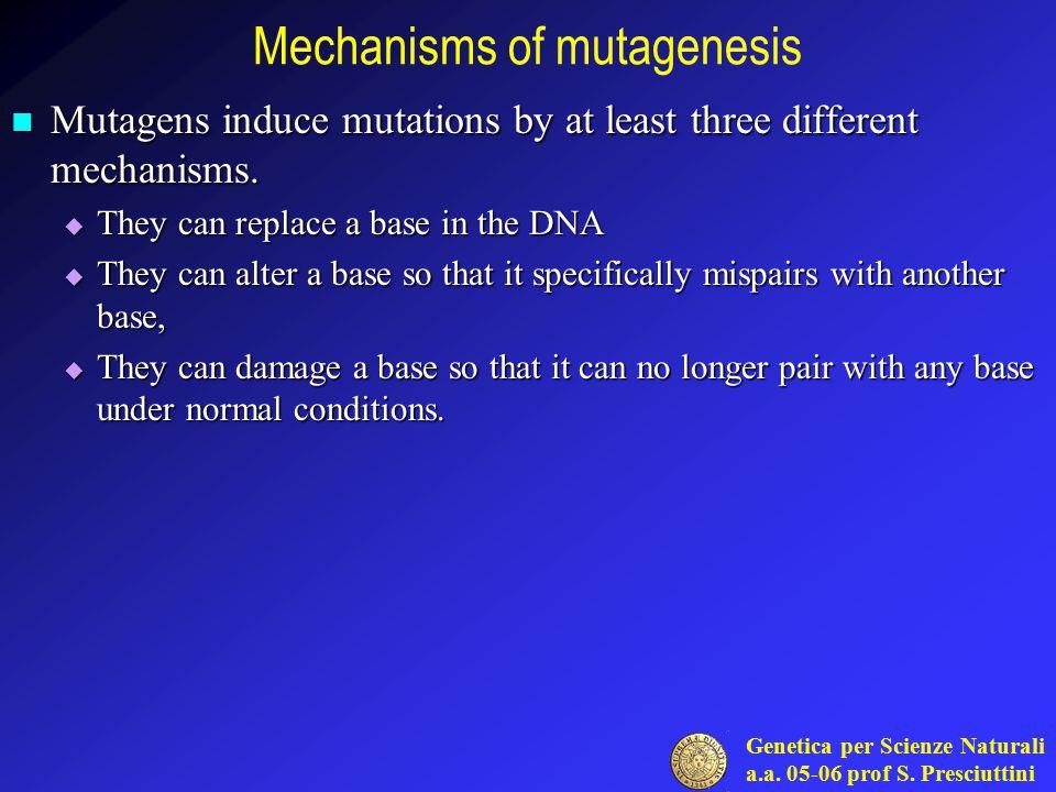 Genetica per Scienze Naturali a.a. 05-06 prof S. Presciuttini Mechanisms of mutagenesis Mutagens induce mutations by at least three different mechanis