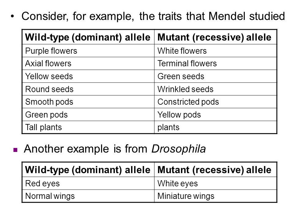 Wild-type (dominant) alleleMutant (recessive) allele Purple flowersWhite flowers Axial flowersTerminal flowers Yellow seedsGreen seeds Round seedsWrin