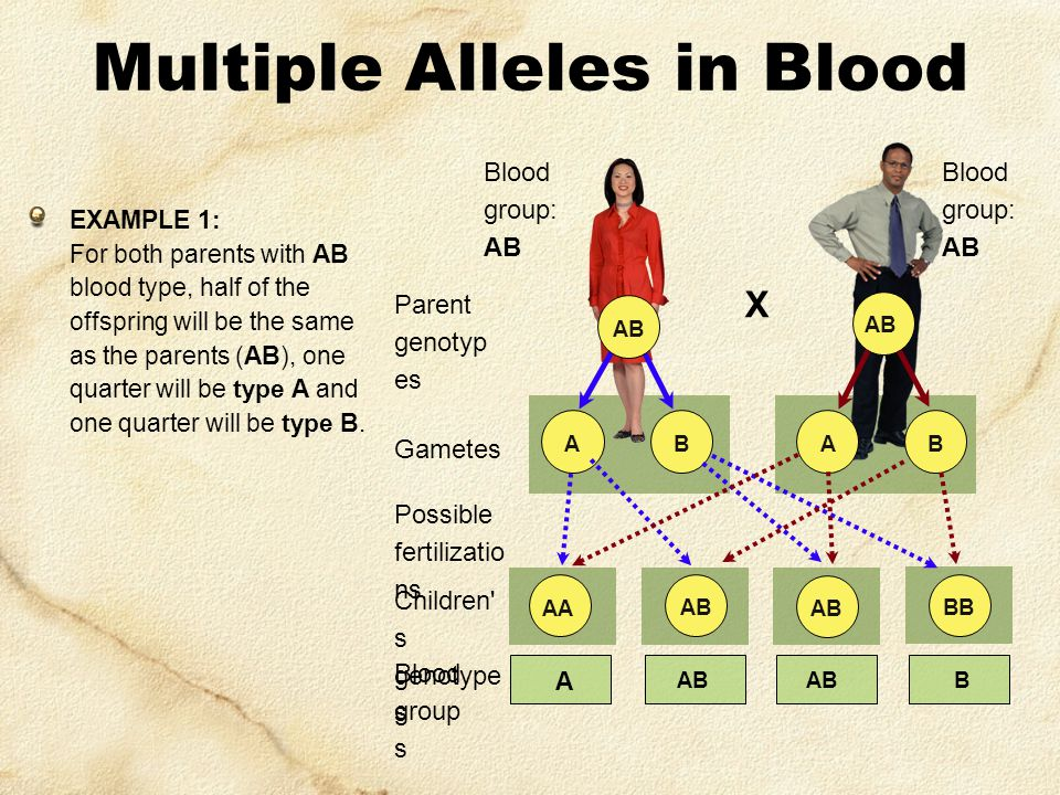 X Blood group: AB Parent genotyp es Blood group: AB Gametes BBAA AB Multiple Alleles in Blood EXAMPLE 1: For both parents with AB blood type, half of the offspring will be the same as the parents (AB), one quarter will be type A and one quarter will be type B.