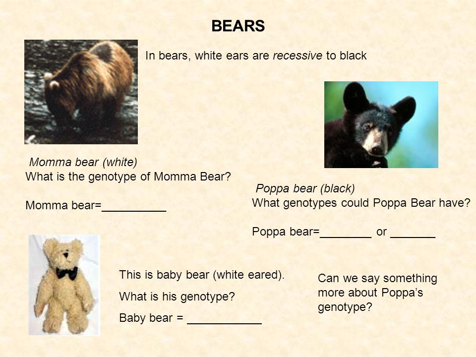 In bears, white ears are recessive to black Momma bear (white) What is the genotype of Momma Bear.