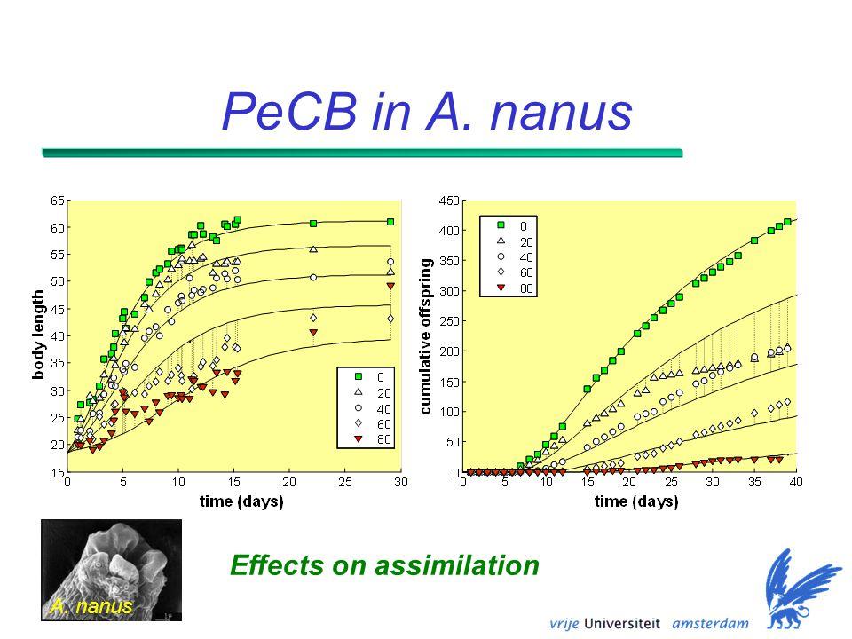 PeCB in A. nanus Effects on assimilation A. nanus