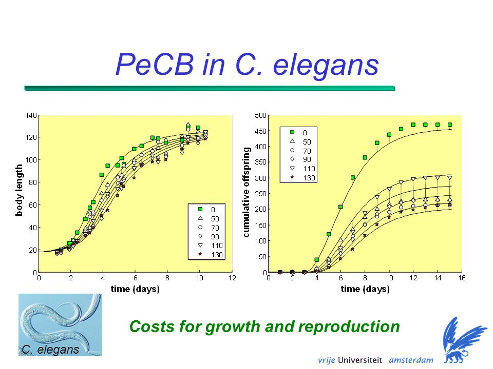 PeCB in C. elegans Costs for growth and reproduction C. elegans