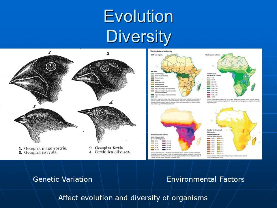 Evolution Diversity Genetic VariationEnvironmental Factors Affect evolution and diversity of organisms