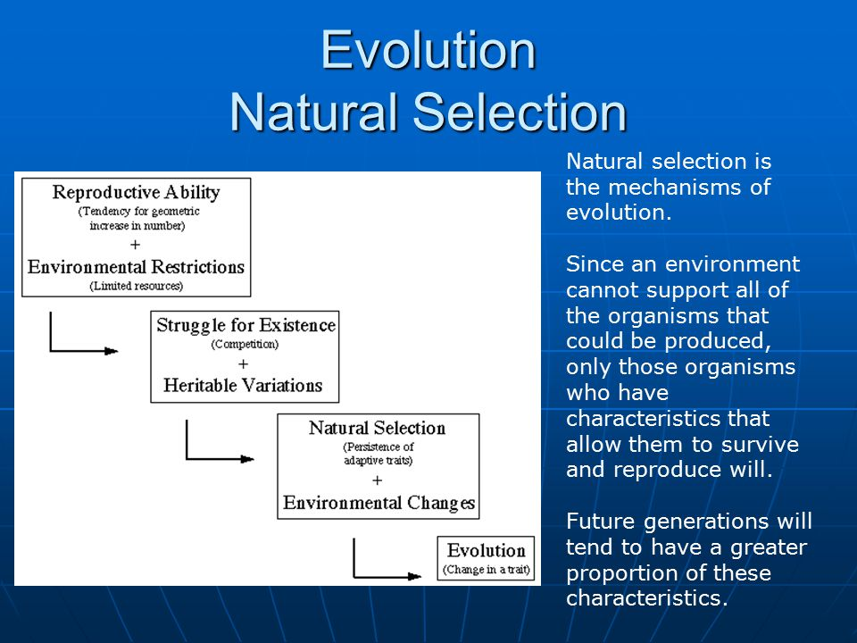 Evolution Natural Selection Natural selection is the mechanisms of evolution.