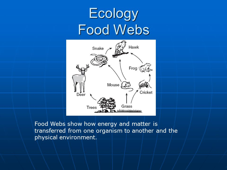 Ecology Food Webs Food Webs show how energy and matter is transferred from one organism to another and the physical environment.