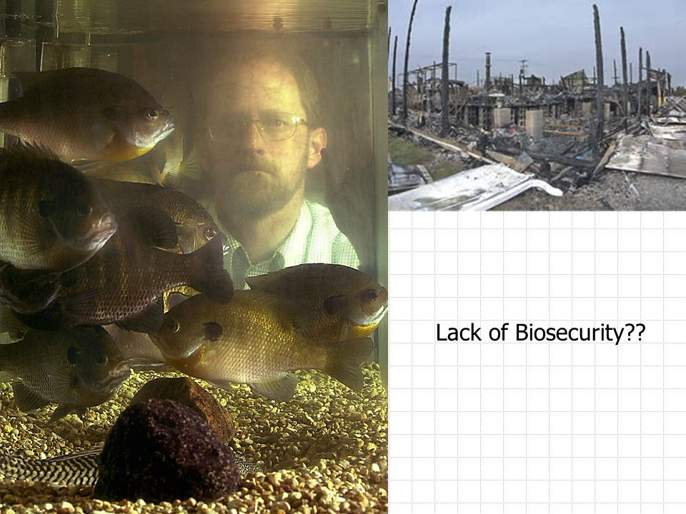 Lack of Biosecurity