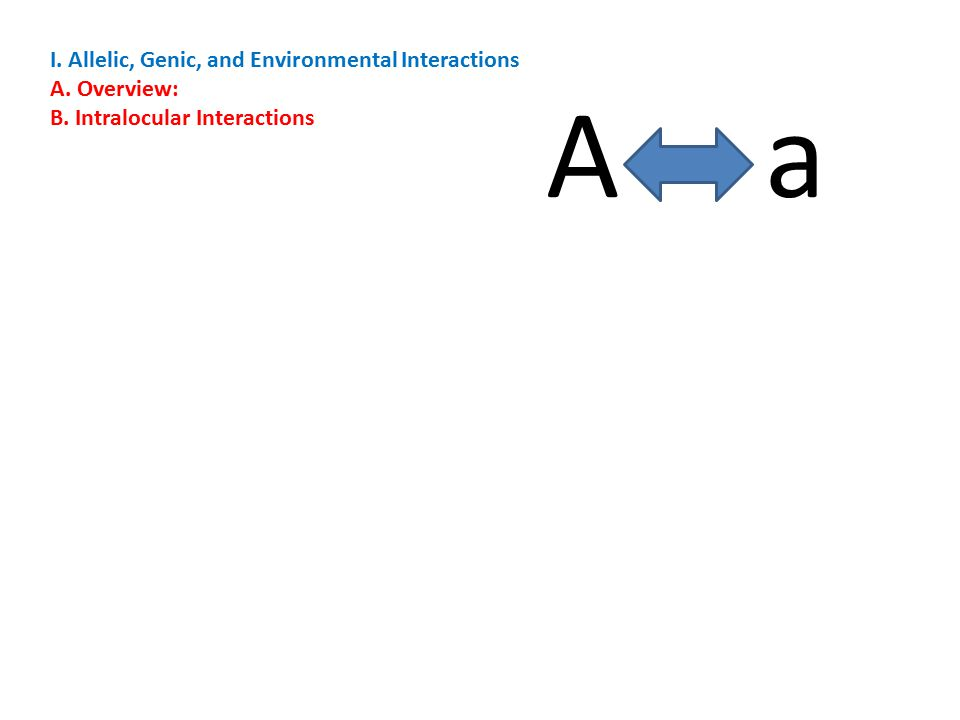I. Allelic, Genic, and Environmental Interactions A. Overview: B. Intralocular Interactions A a