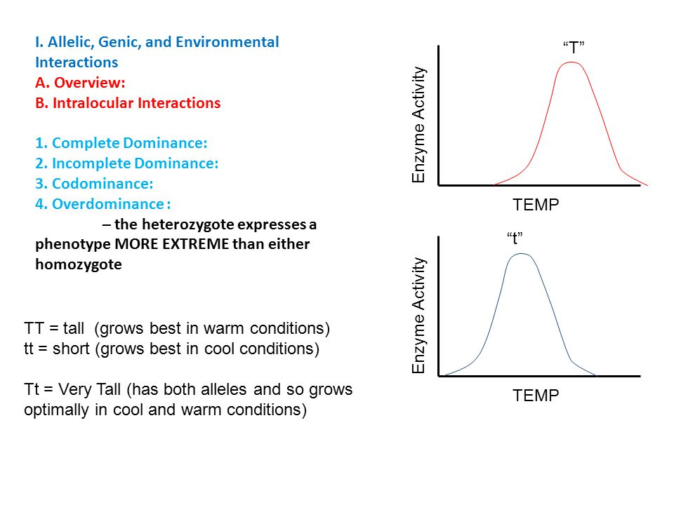 I. Allelic, Genic, and Environmental Interactions A.