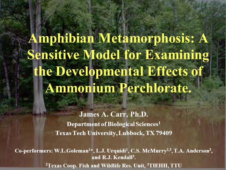 Amphibian Metamorphosis: A Sensitive Model for Examining the Developmental Effects of Ammonium Perchlorate.