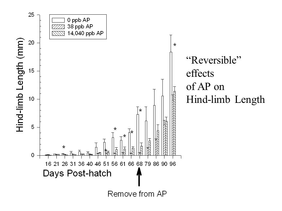 Reversible effects of AP on Hind-limb Length