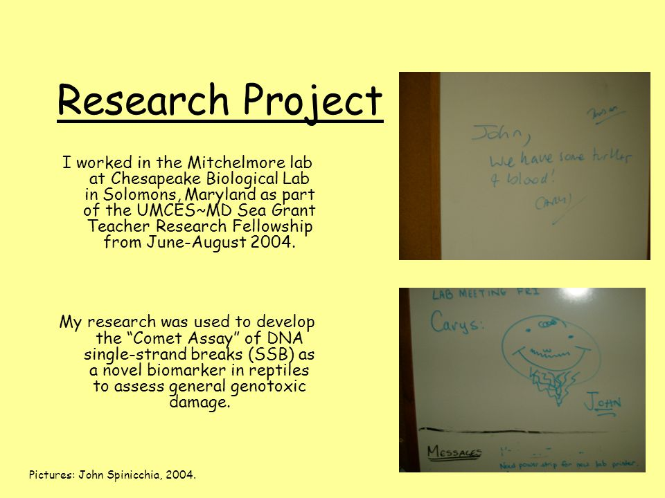 Research Project I worked in the Mitchelmore lab at Chesapeake Biological Lab in Solomons, Maryland as part of the UMCES~MD Sea Grant Teacher Research Fellowship from June-August 2004.
