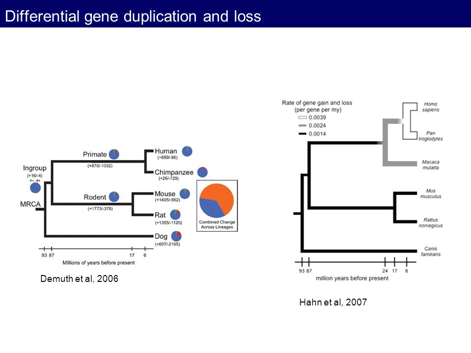 Differential gene duplication and loss Demuth et al, 2006 Hahn et al, 2007