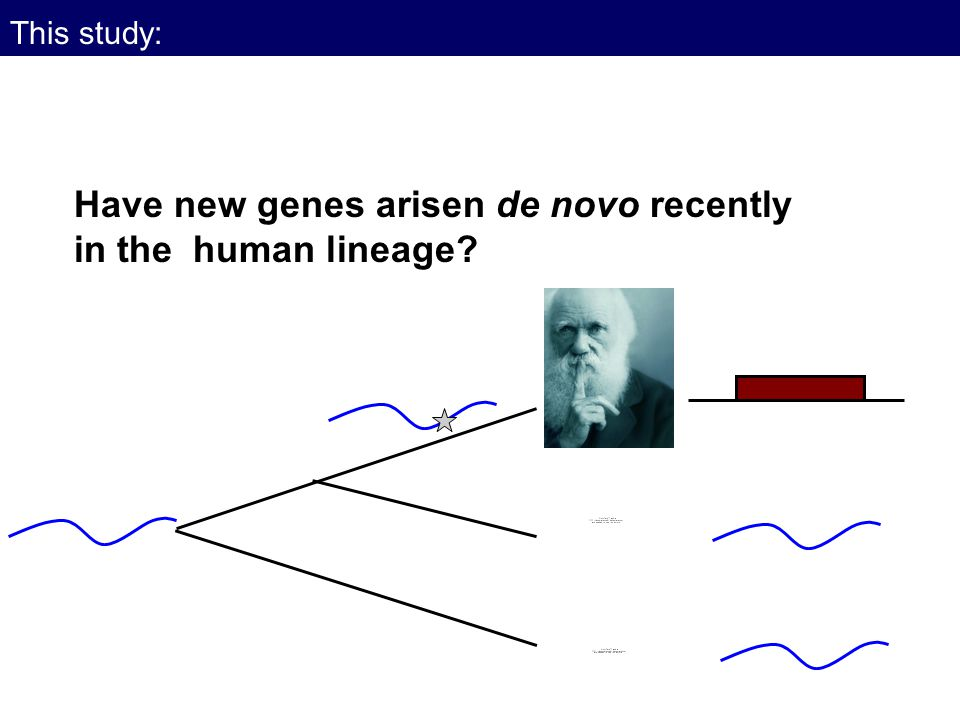 This study: Have new genes arisen de novo recently in the human lineage?