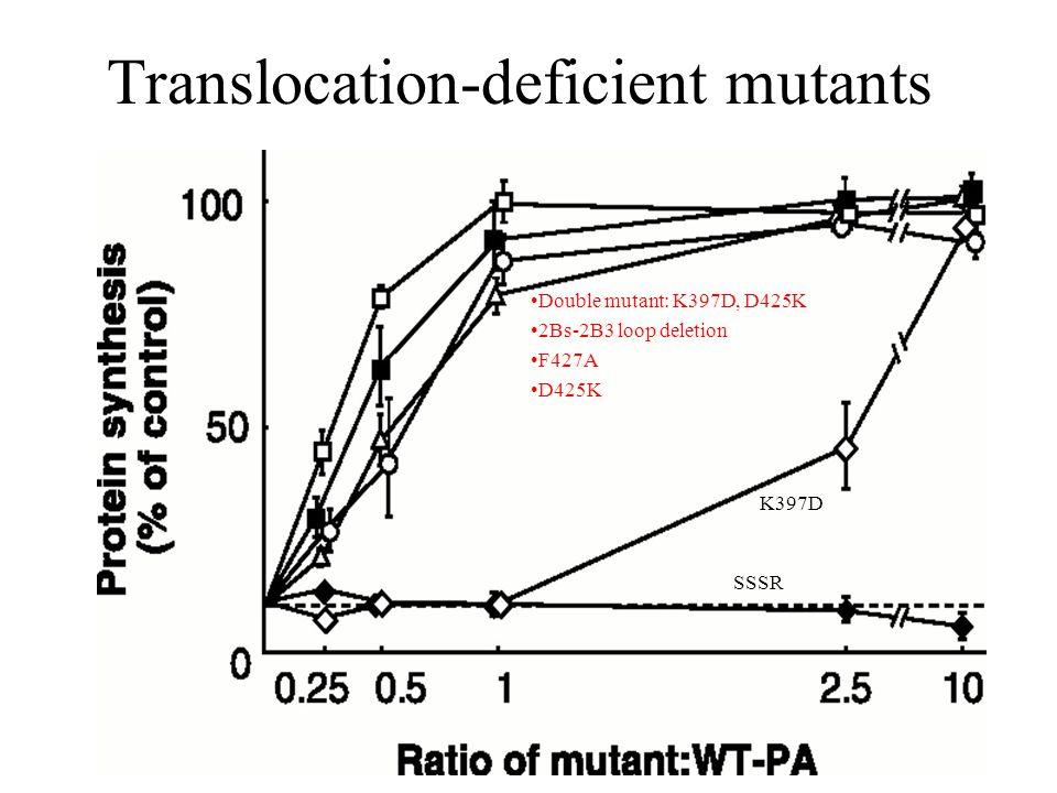 Translocation-deficient mutants Double mutant: K397D, D425K 2Bs-2B3 loop deletion F427A D425K SSSR K397D