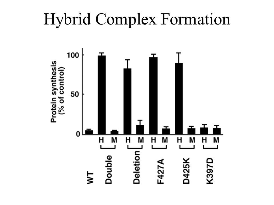 Hybrid Complex Formation