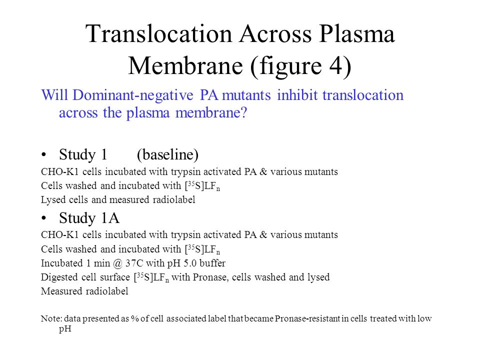 Will Dominant-negative PA mutants inhibit translocation across the plasma membrane? Study 1(baseline) CHO-K1 cells incubated with trypsin activated PA
