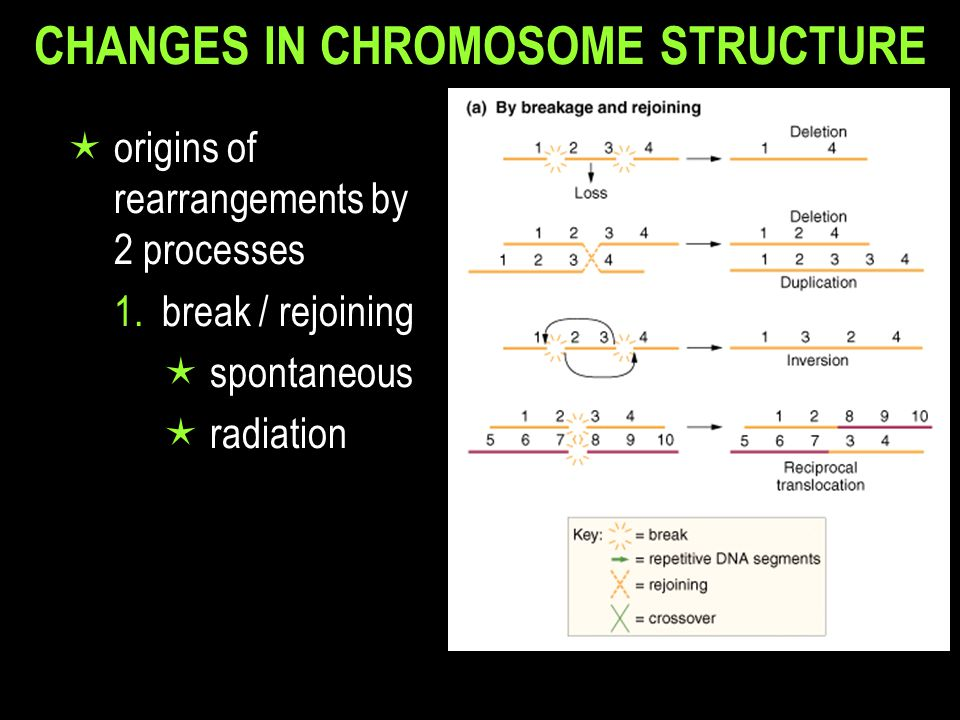 CHANGES IN CHROMOSOME STRUCTURE  origins of rearrangements by 2 processes 1.break / rejoining  spontaneous  radiation