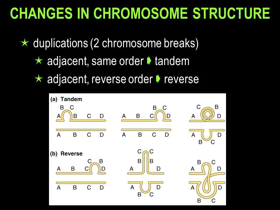CHANGES IN CHROMOSOME STRUCTURE  duplications (2 chromosome breaks)  adjacent, same order  tandem  adjacent, reverse order  reverse