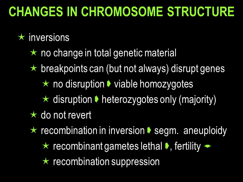 CHANGES IN CHROMOSOME STRUCTURE  inversions  no change in total genetic material  breakpoints can (but not always) disrupt genes  no disruption  viable homozygotes  disruption  heterozygotes only (majority)  do not revert  recombination in inversion  segm.