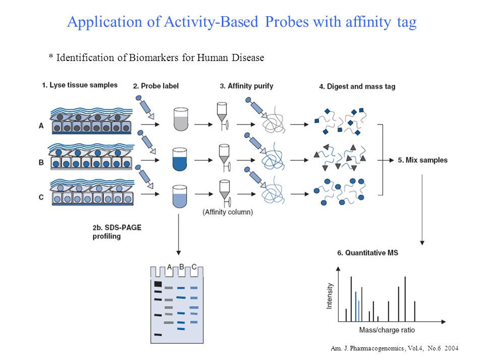 Application of Activity-Based Probes with affinity tag * Identification of Biomarkers for Human Disease Am. J. Pharmacogenomics, Vol.4, No.6 2004