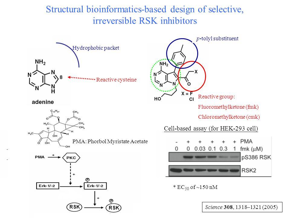 Structural bioinformatics-based design of selective, irreversible RSK inhibitors Reactive group: Fluoromethylketone (fmk) Chloromethylketone (cmk) p-t