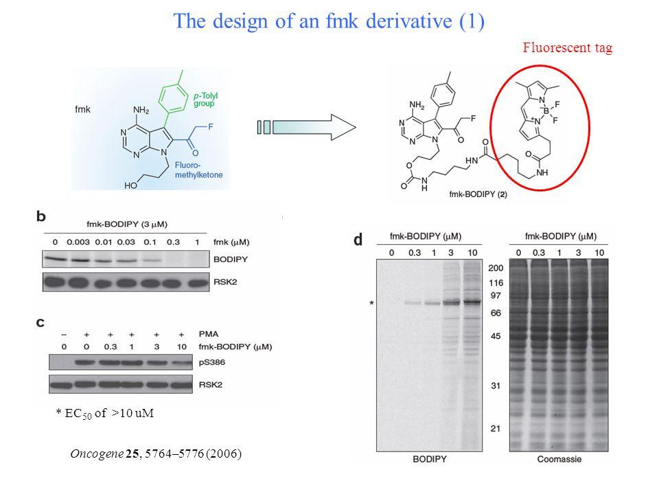 The design of an fmk derivative (1) Oncogene 25, 5764–5776 (2006) * EC 50 of >10 uM Fluorescent tag