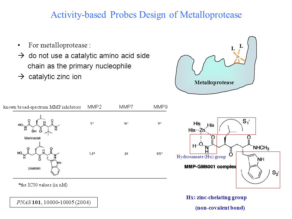 Activity-based Probes Design of Metalloprotease Metalloprotease L L For metalloprotease :  do not use a catalytic amino acid side chain as the primary nucleophile  catalytic zinc ion PNAS 101, 10000-10005 (2004) Hydroxamate (Hx) group Hx: zinc-chelating group (non-covalent bond)