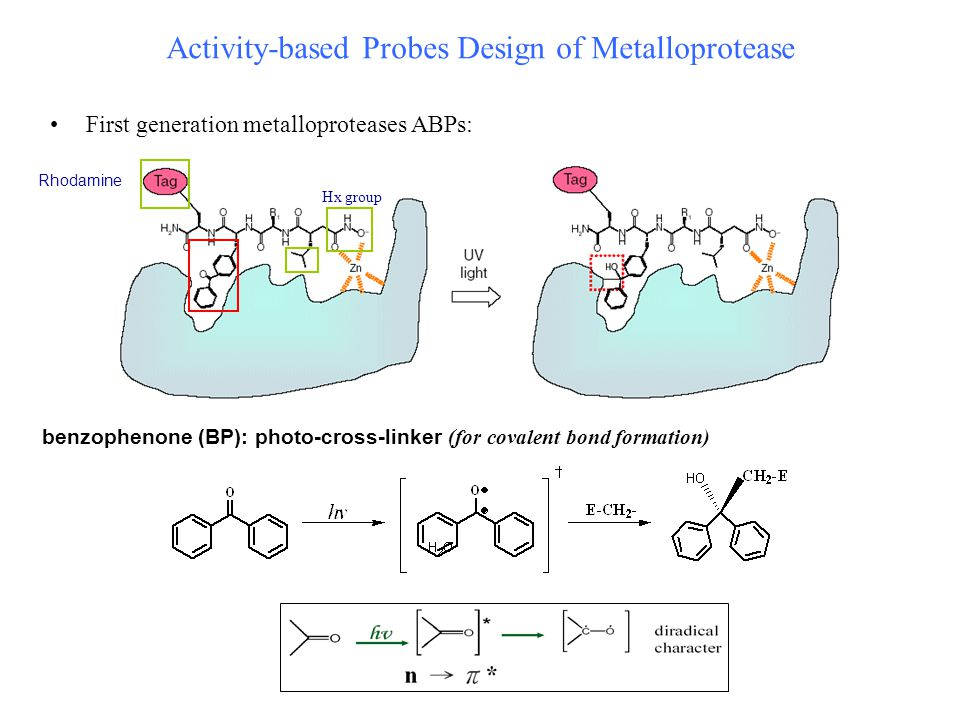 Activity-based Probes Design of Metalloprotease First generation metalloproteases ABPs: Hx group benzophenone (BP): photo-cross-linker (for covalent bond formation) Rhodamine