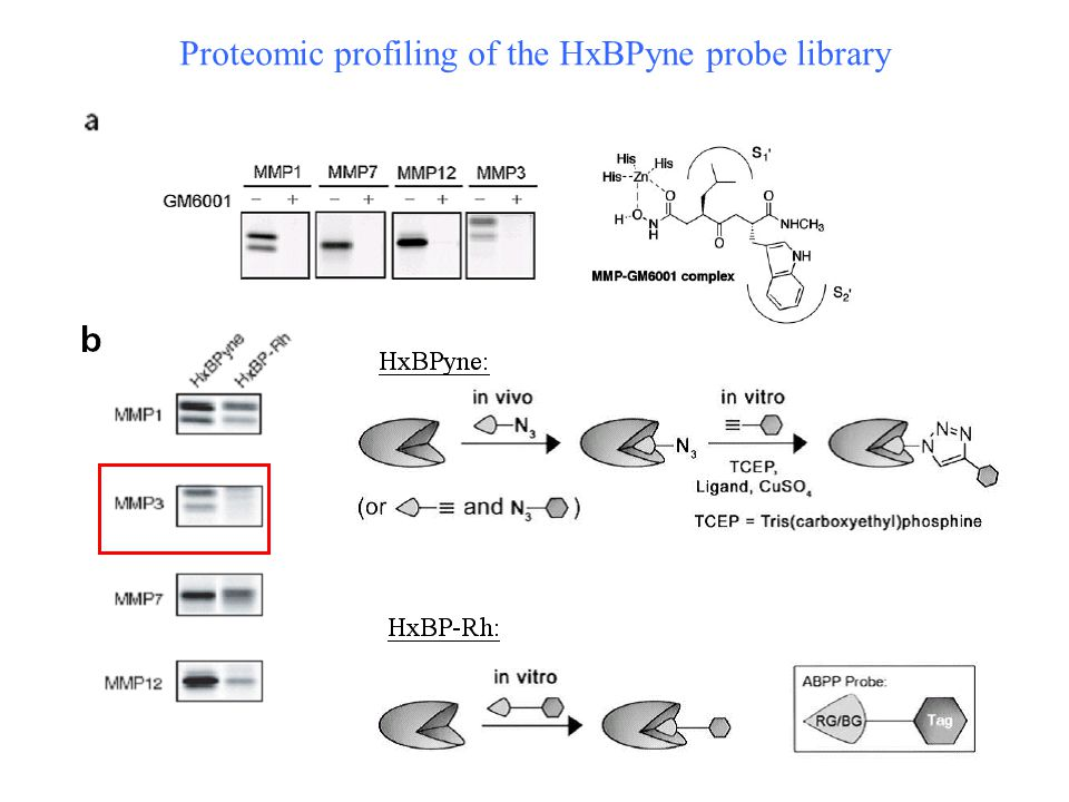 Proteomic profiling of the HxBPyne probe library