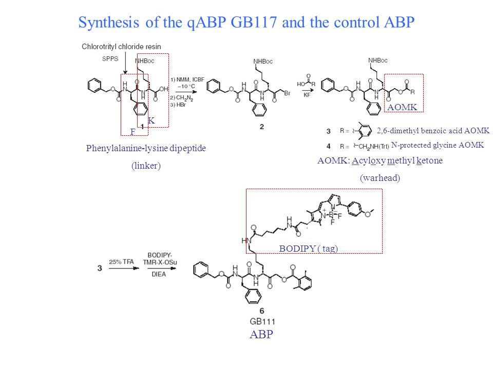 Synthesis of the qABP GB117 and the control ABP GB111 F K BODIPY ( tag) Phenylalanine-lysine dipeptide (linker) ABP AOMK AOMK: Acyloxy methyl ketone (