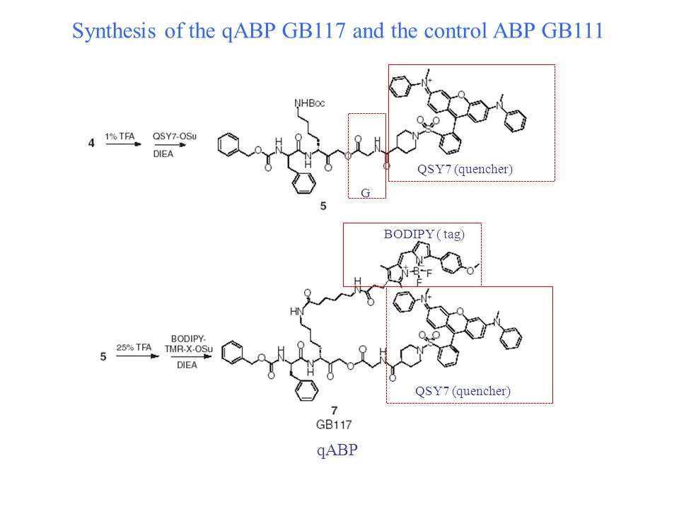 Synthesis of the qABP GB117 and the control ABP GB111 G QSY7 (quencher) qABP BODIPY ( tag) QSY7 (quencher)