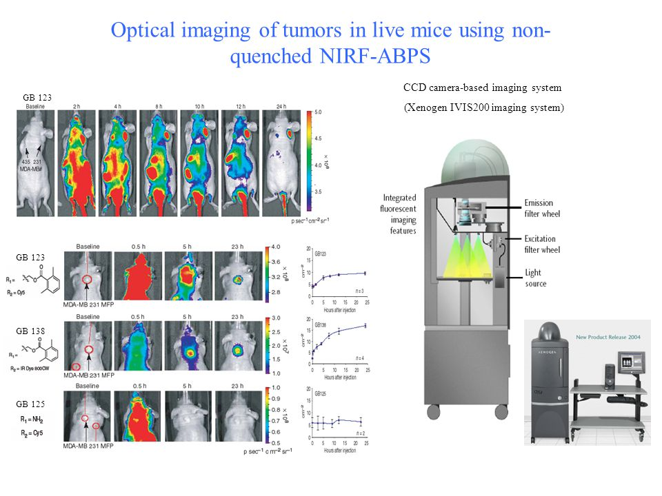Optical imaging of tumors in live mice using non- quenched NIRF-ABPS GB 123 GB 138 GB 125 CCD camera-based imaging system (Xenogen IVIS200 imaging system)