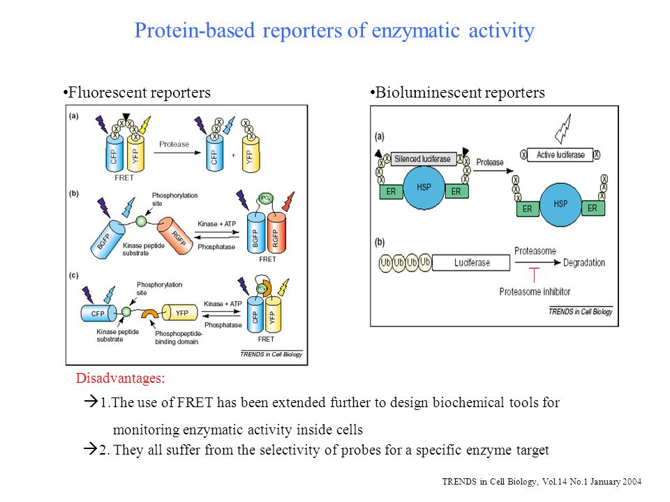 Case-discussion (2) * Metalloprotease  Metalloproteases are a large, diverse class of enzymes involved in many physiological and disease processes.