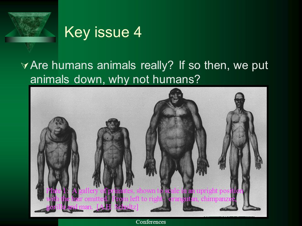 PP produced by Julie Arliss Academy Conferences Key issue 4  Are humans animals really.