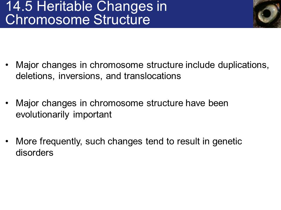 Nondisjunction Changes in chromosome number are usually caused by nondisjunction Nondisjunction affects chromosome number at fertilization and causes genetic disorders among resulting offspring nondisjunction Failure of sister chromatids or homologous chromosomes to separate during nuclear division
