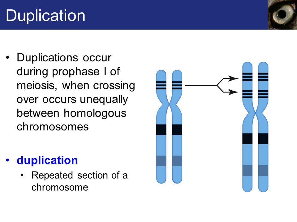 Deletion In mammals, deletions usually cause serious disorders and are often lethal deletion Loss of part of a chromosome