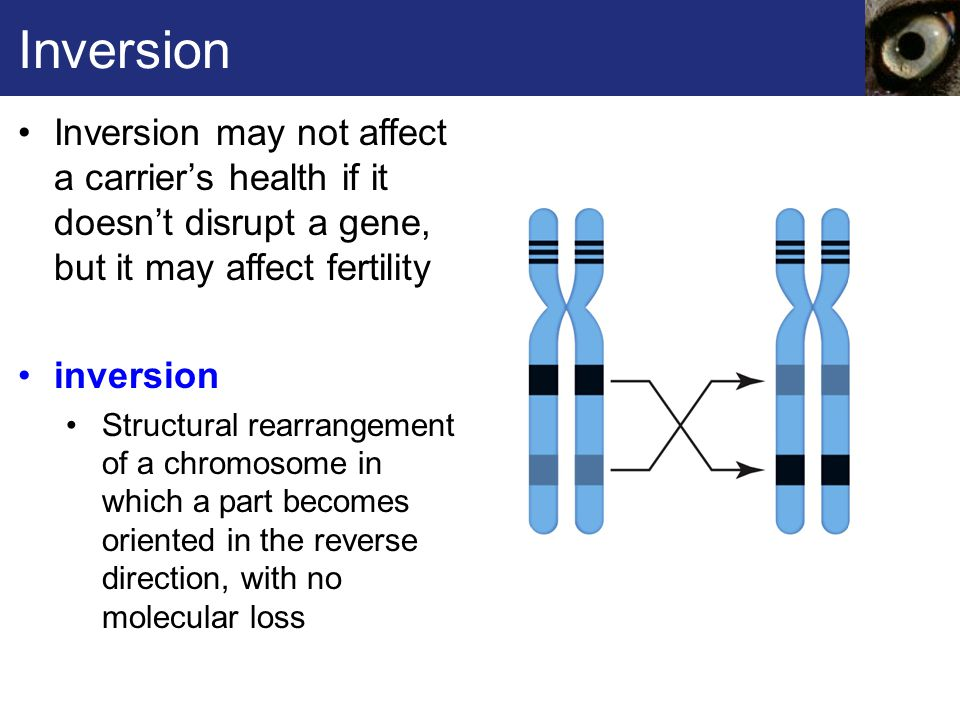 Fig.14.9ab, p. 210 B With a deletion, a section of a chromosome gets lost.
