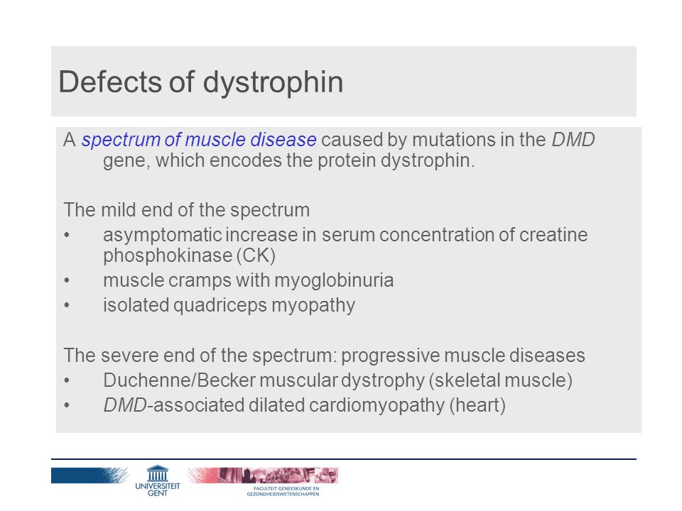 Duchenne muscular dystrophy (DMD) Normal for the first two years of life Symptoms present before age 5 years Progressive symmetrical muscular weakness, proximal greater than distal, often with calf hypertrophy Wheelchair-dependency before age 13 years Unlikely to survive beyond age of 20 years Die of respiratory failure or cardiomyopathy Modest decrease in IQ (~20 points) Prevalence: 1/5,000 males