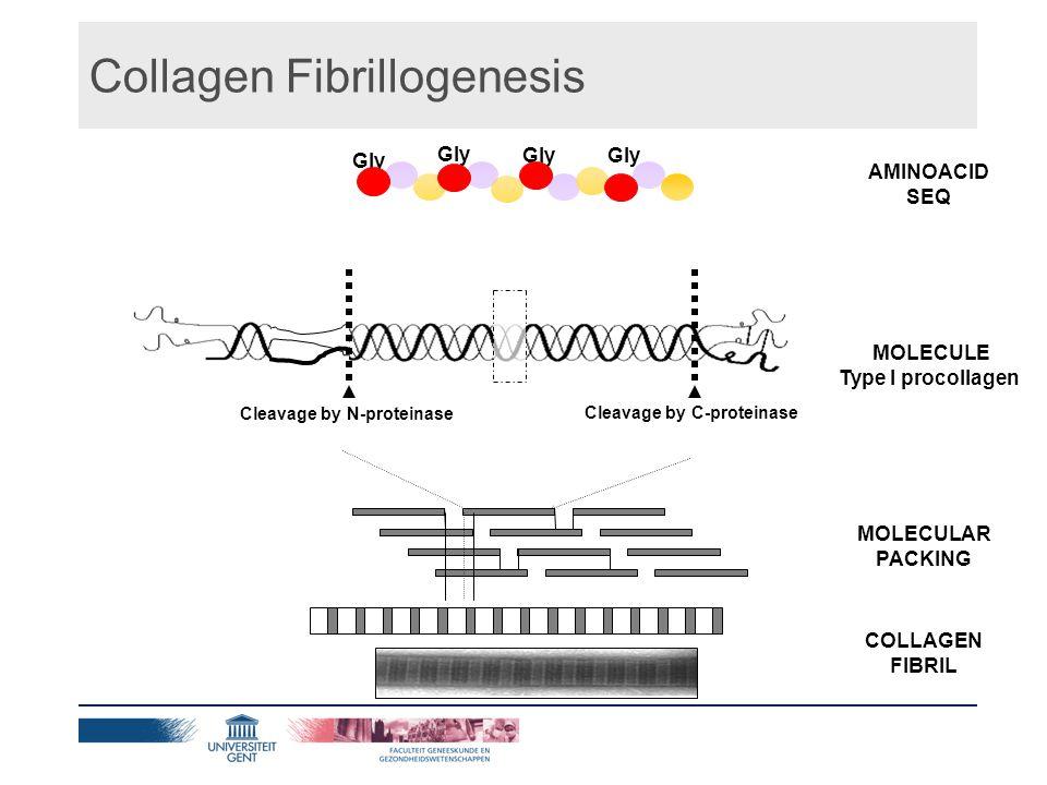N-terminus Cleavage by N-proteinase Cleavage by C-proteinase Gly AMINOACID SEQ MOLECULE Type I procollagen MOLECULAR PACKING COLLAGEN FIBRIL Collagen Fibrillogenesis