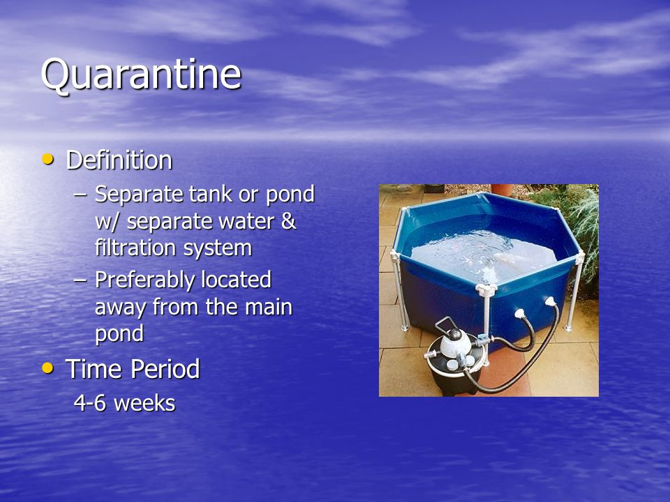 Quarantine Definition Definition –Separate tank or pond w/ separate water & filtration system –Preferably located away from the main pond Time Period Time Period 4-6 weeks