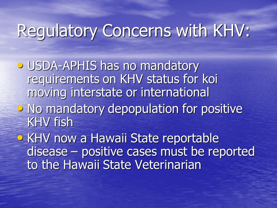 Regulatory Concerns with KHV: USDA-APHIS has no mandatory requirements on KHV status for koi moving interstate or international USDA-APHIS has no mandatory requirements on KHV status for koi moving interstate or international No mandatory depopulation for positive KHV fish No mandatory depopulation for positive KHV fish KHV now a Hawaii State reportable disease – positive cases must be reported to the Hawaii State Veterinarian KHV now a Hawaii State reportable disease – positive cases must be reported to the Hawaii State Veterinarian