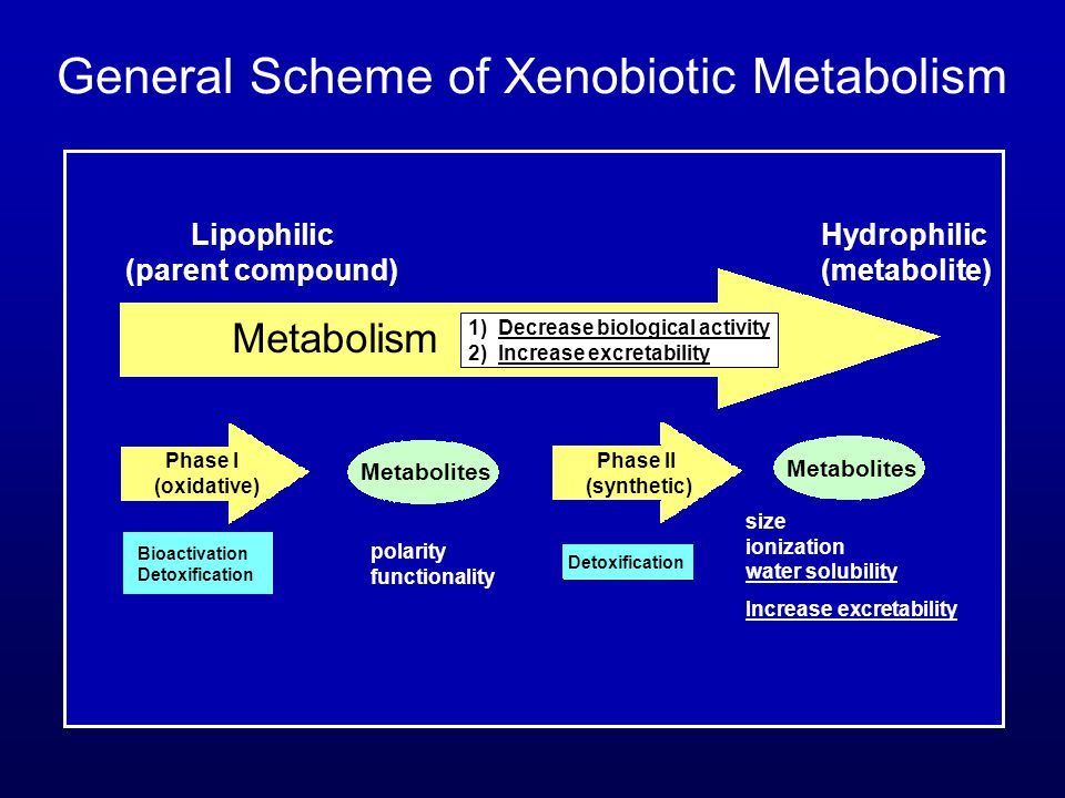 Metabolism 1) Decrease biological activity 2) Increase excretability General Scheme of Xenobiotic Metabolism Lipophilic Hydrophilic (parent compound)