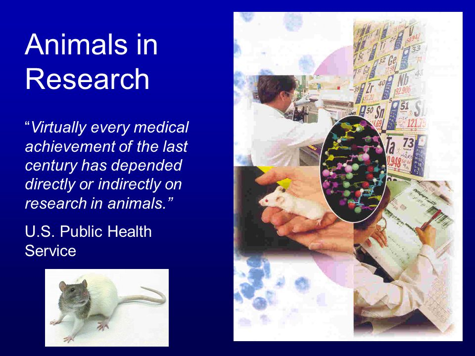 "Animals in Research ""Virtually every medical achievement of the last century has depended directly or indirectly on research in animals."" U.S. Public"