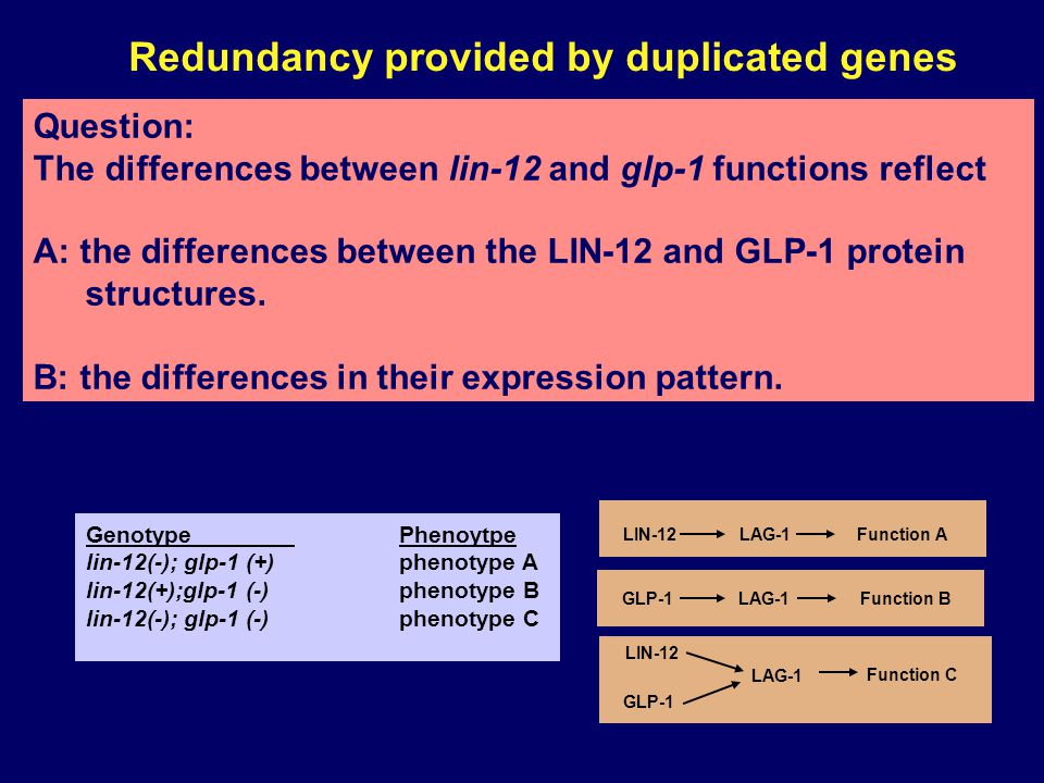 Redundancy provided by duplicated genes A B Same biochemical functions Function GenotypePhenotype H2B 1(-); H2B2 (+)wild type H2B 1(+); H2B2 (-)wild type H2B 1(-); H2B2 (-)dead Yeast Histone H2B has two genes encoding essentially the same protein H2B is an essential component of nucleosomes Syne1 Syne12 Nuclear membrane functions GenotypePhenotype syne1(-); syne2 (+)wild type syne1(+); syne2 (-) wild type syne1(-); syne2 (-) die at birth, Mouse Syne 1/2 genes